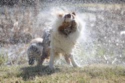 Ditto water shake