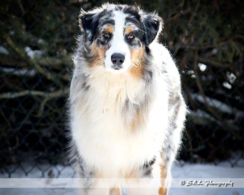 Puppy Play 9 mos snow-2.jpg