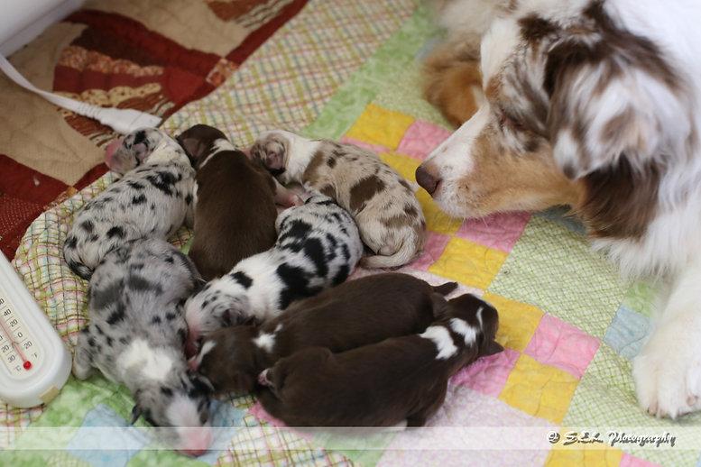 Puppies Day 1-4.jpg