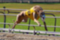 Dog tracks and Florida Greyhound Association