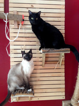 Cat wall woodworking project