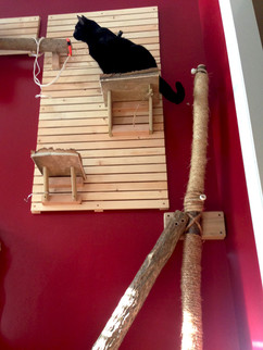 Kitty wall woodworking project