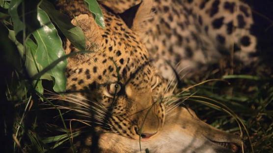 NIKON - Wildlife Photography Course