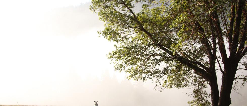 xiaohu_fog.JPG