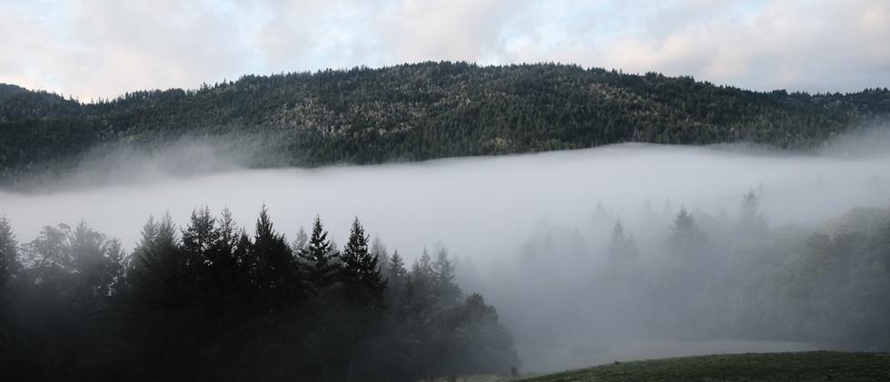 mountain fog.JPG