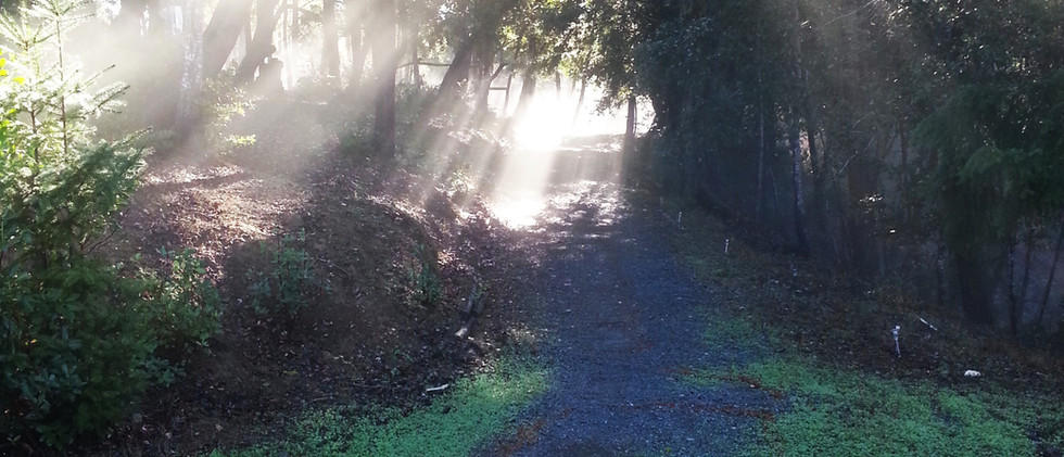 path_sunlight.jpg