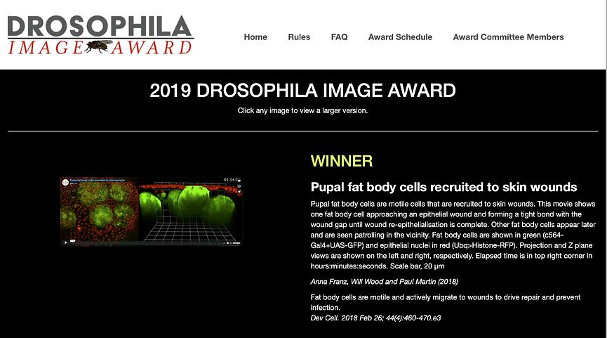 Drosophila image award winner 2019.png