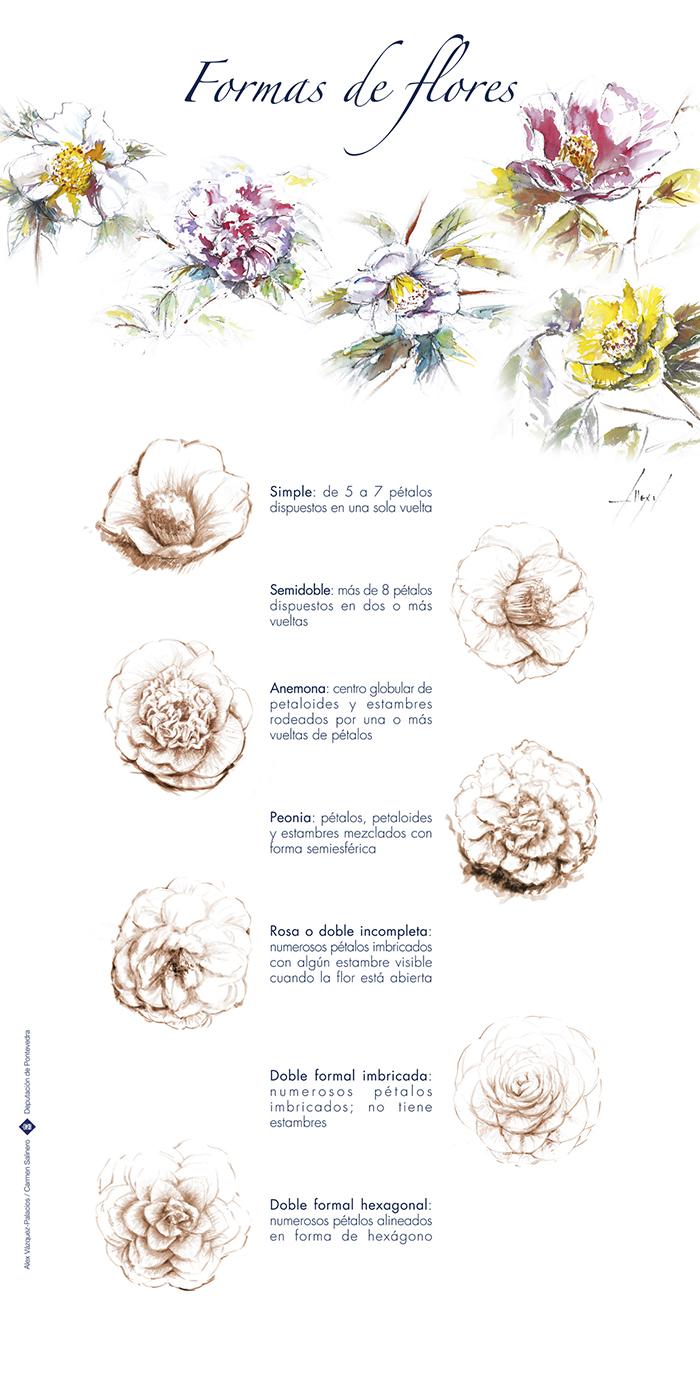 Formas de flores