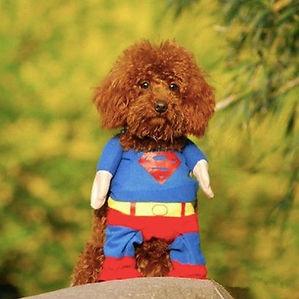 Winter Style Pet Dog Superman Clothes Costume Suit Puppy Jumpsuit Apparel