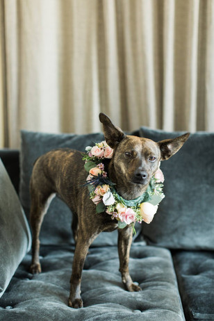 Floral design for pets in your wedding