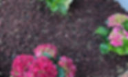 Beylikdüzü Bahçe Peyzajı Uygulaması Bahçe Bakımı Beylikdüzü Peyzaj Çim Bakımı