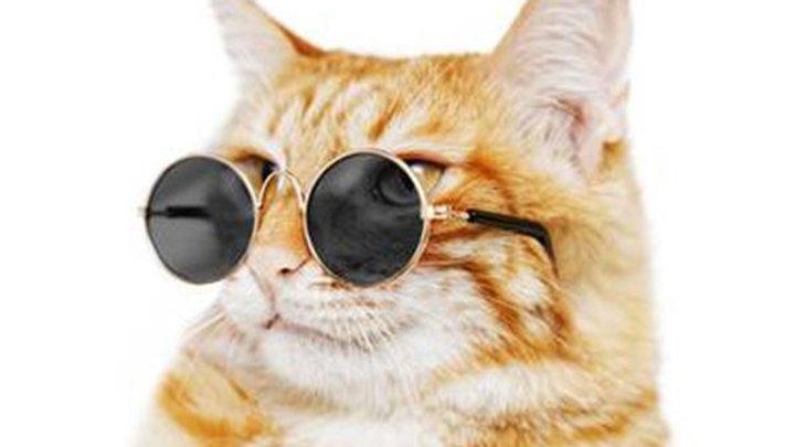 Lentes para gatos