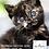 Thumbnail: Biofresh Super Premium para gatos cachorros
