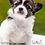 Thumbnail: Biofresh Super Premium para perros cachorros raza mediana