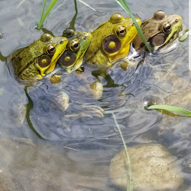 Pond wildlife