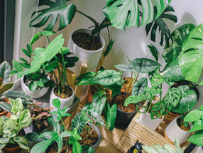 6 tips to keep your indoor plants thriving throughout winter!