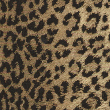 GW6511 Leopard