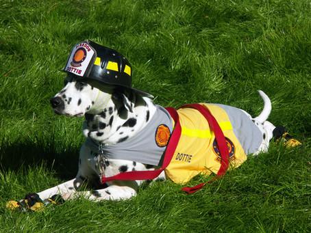 Kako su dalmatineri postali psi-vatrogasci?
