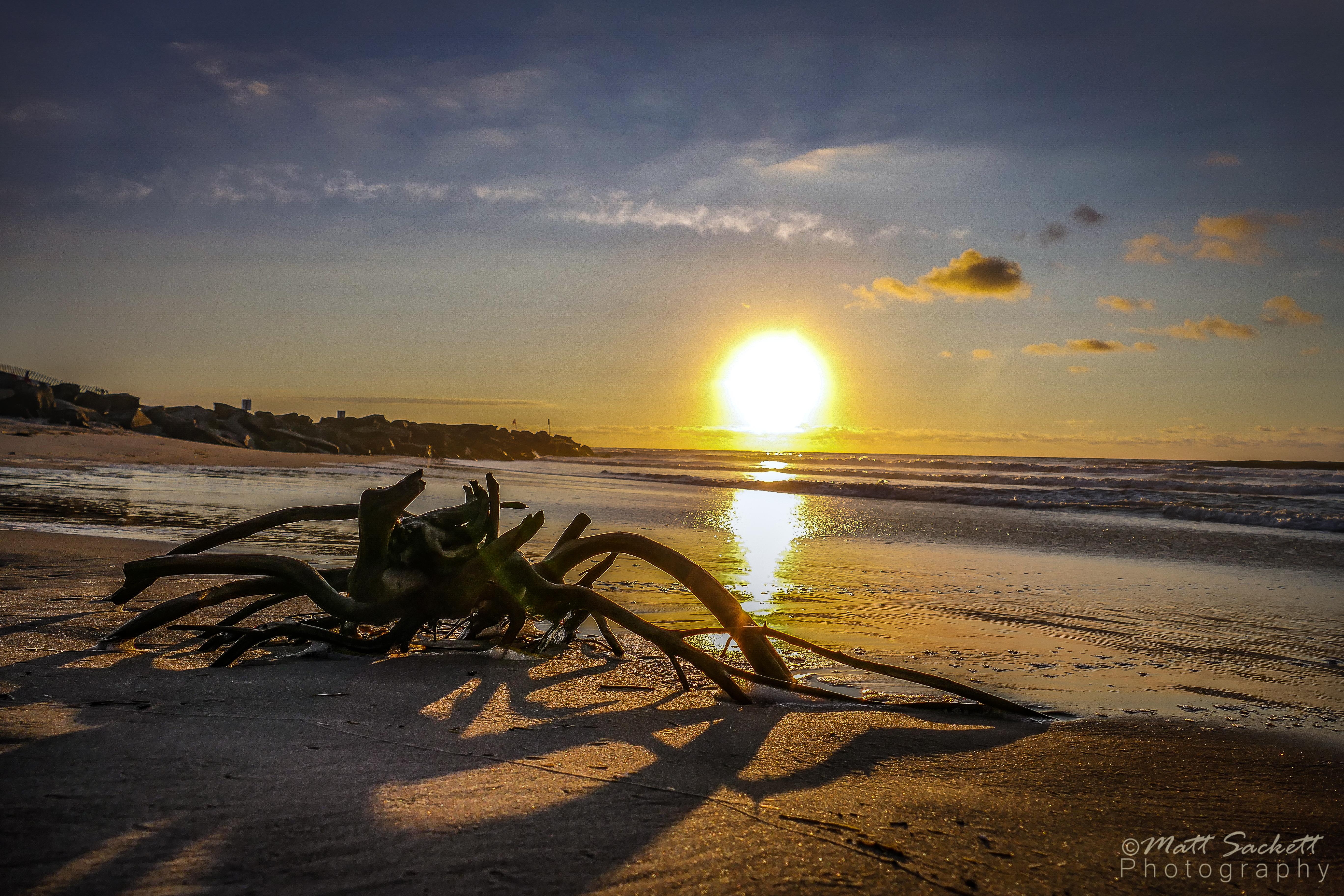 Sunrise Driftwood