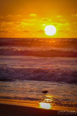 Sunrise Piper