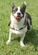 foto hond.jpg