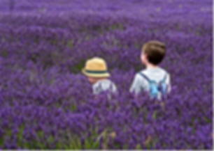 Meme_ Children in Lavender Field_ Phil H