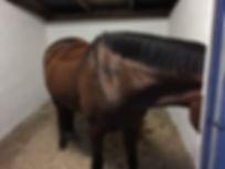Pony - Eponaolie - EFTER.jpg