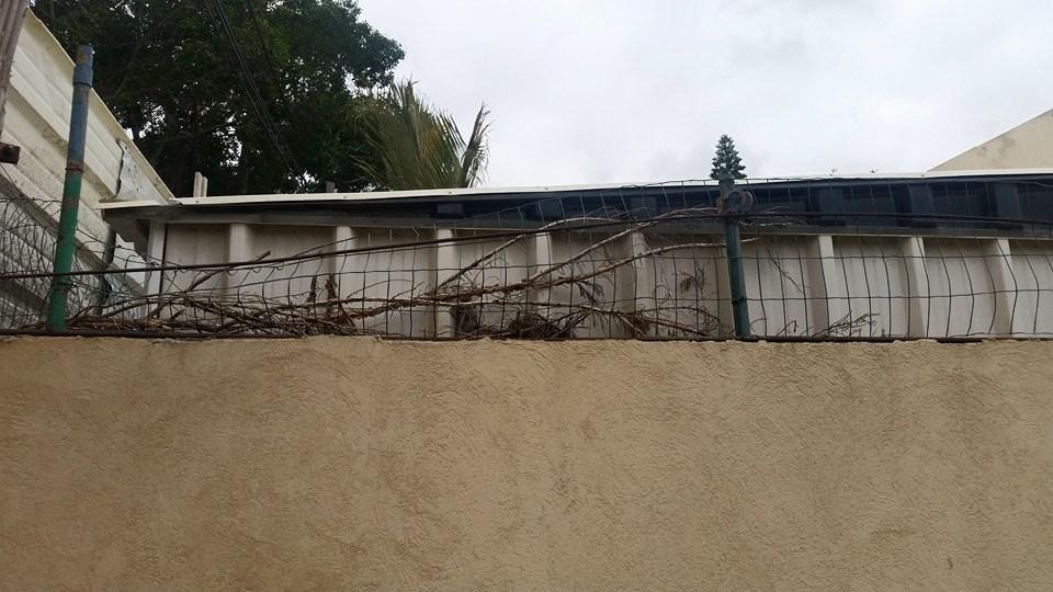 התקנת גדר ירוקה 1