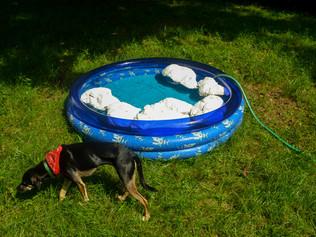 Afloat Redneck Backyard Summer