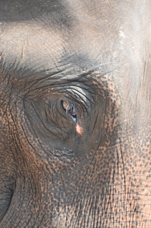 Слон грустит