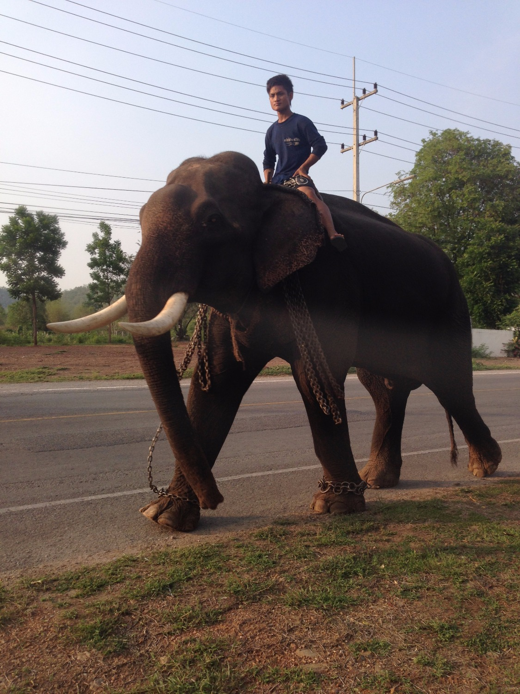Осторожно Слон!