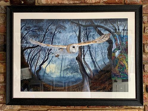 'Barn Owl' By David Hume