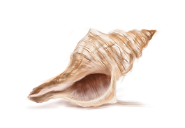 conch_edited.png