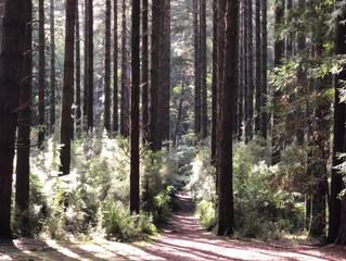 Top 5 Hikes Around Melbourne