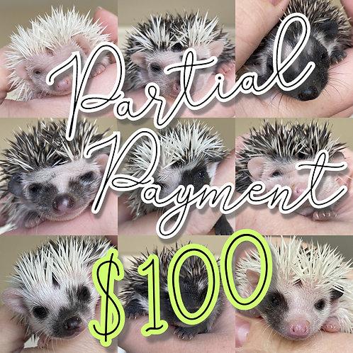 Partial Payment for Hedgehog - $100