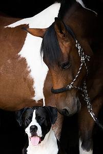horse-3386026_960_720.jpg
