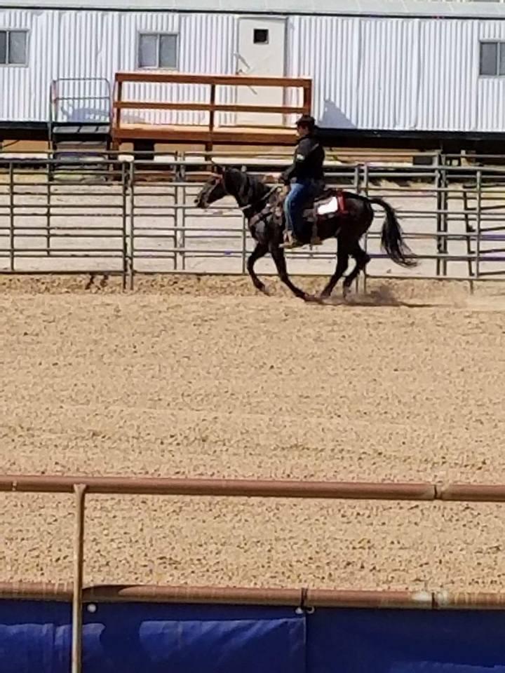 ranch riding 4