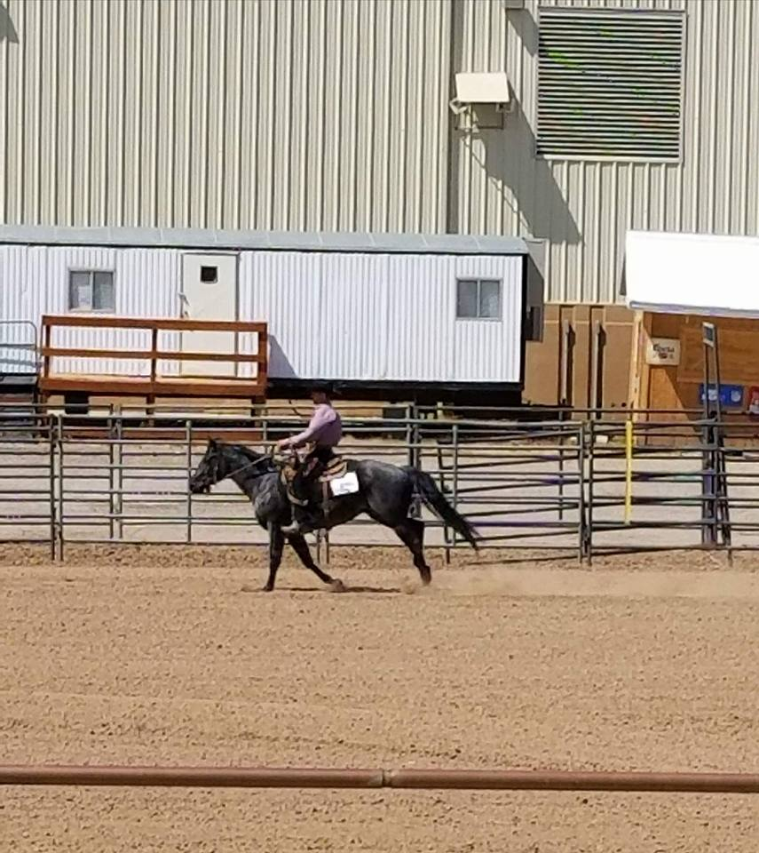 ranch riding 8