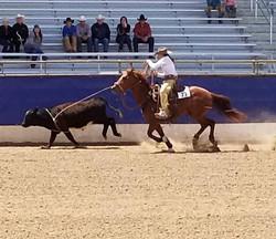 ranch riding 13