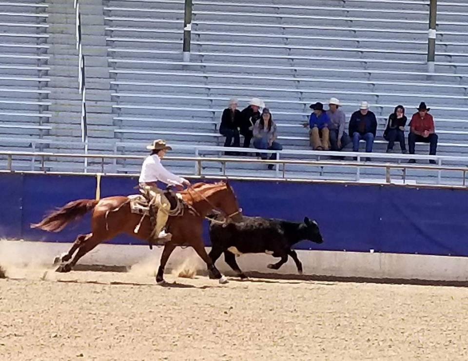 ranch riding 11