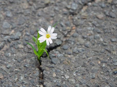 Where did resilience go? The reason I became an Independent Educational Consultant