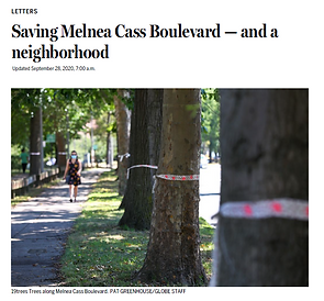 A woman walks down the sidewalk next to large trees that have ribbons tied around them