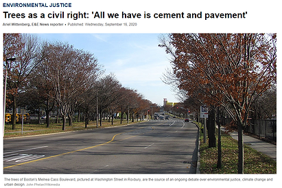 Melnea Cass Boulevard lined with mature trees in the fall