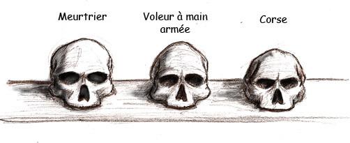 Etude crânes phrénologie