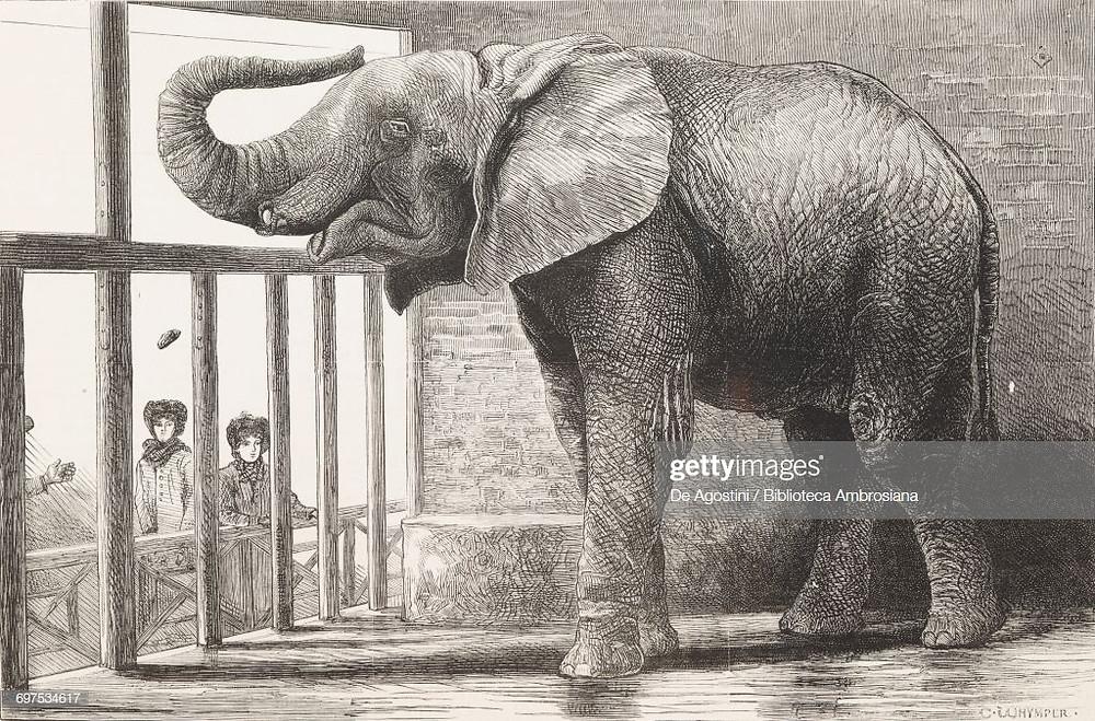 Jumbo dans sa cage du Zoo de Londres