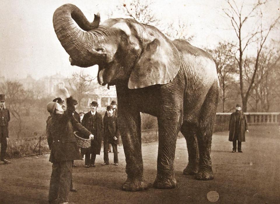 Jumbo dans le parc du zoo de Londres