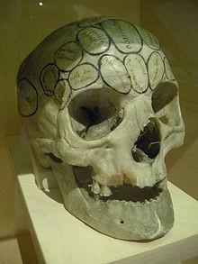 Crâne cartographié selon Gall