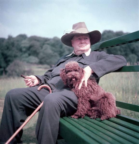 Churchill et son caniche marron
