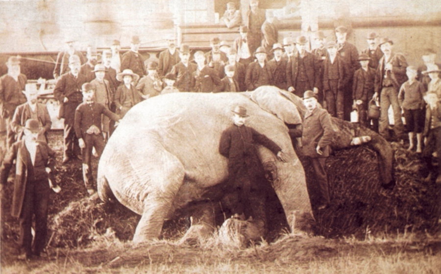 Jumbo mort percuté par un train en 1885