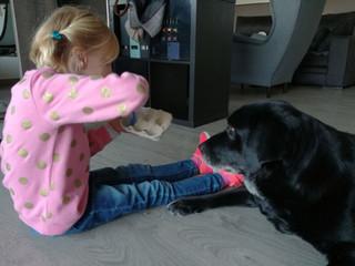 Terapias asistidas con animales